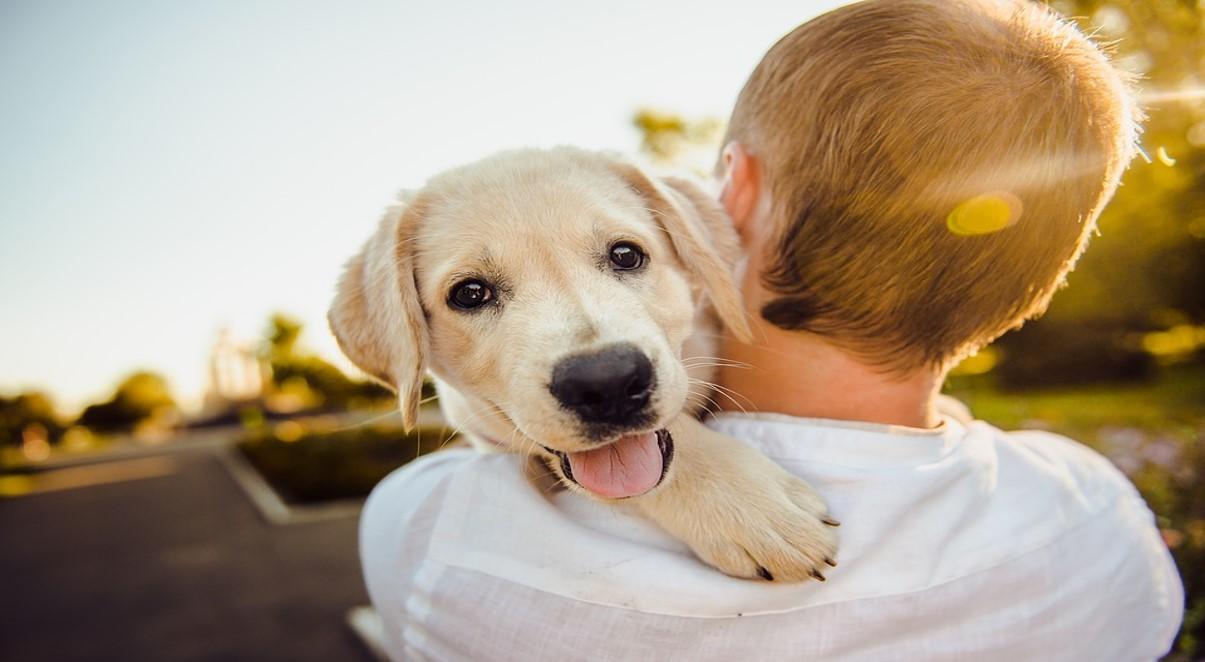 Lavorare con gli animali: quali mestieri si possono fare?