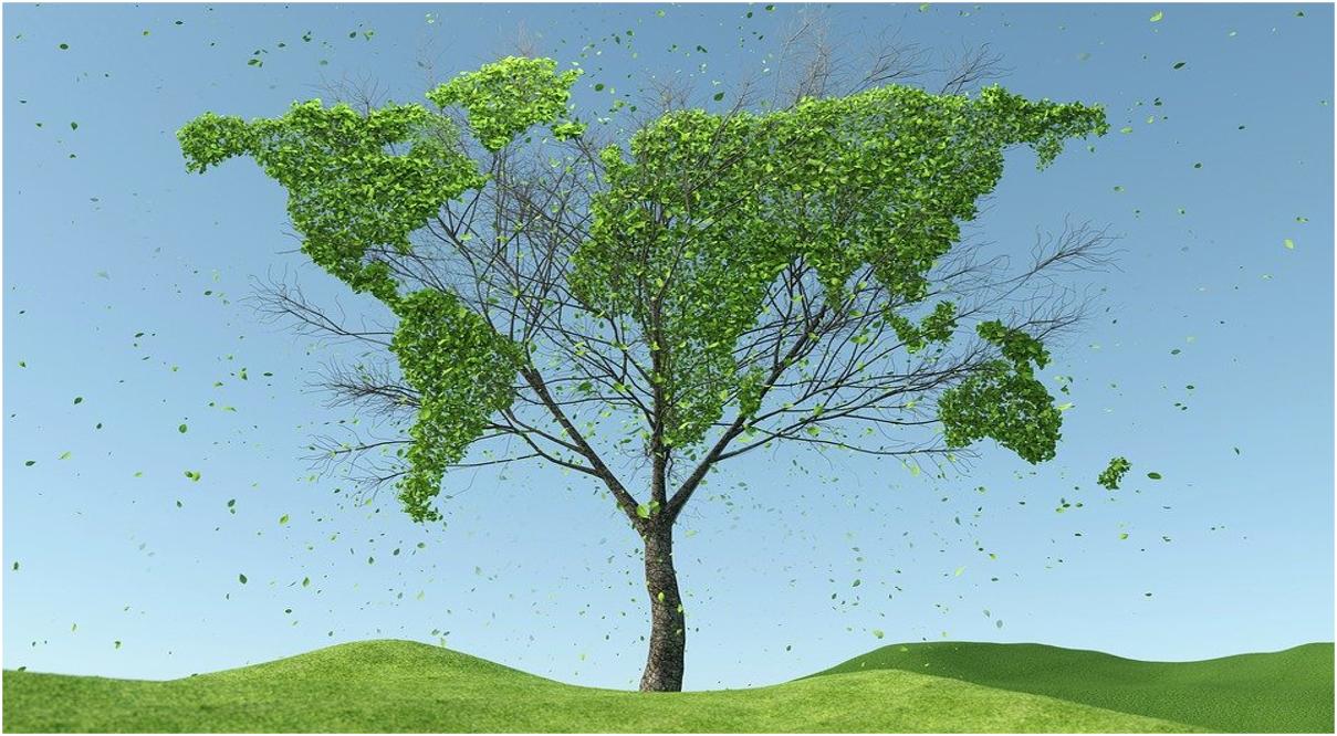 Master sulla sostenibilità: Borsa di studio da 5.000 euro