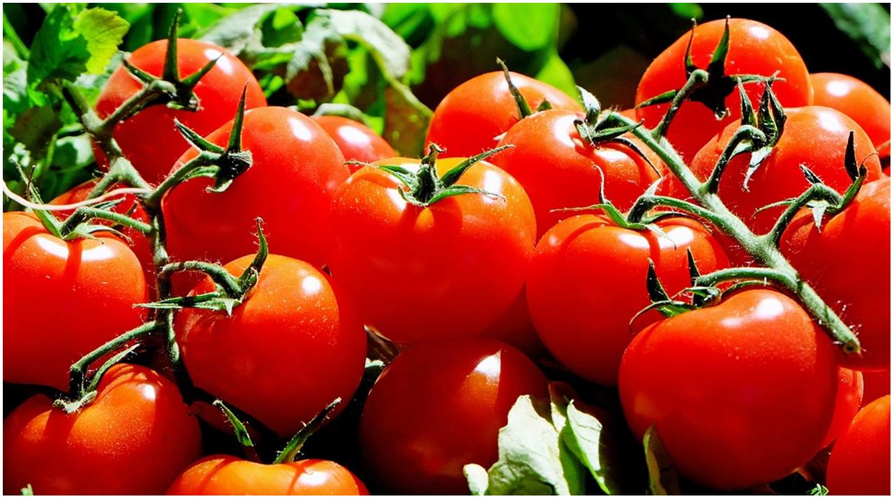 Settore alimentare: Mutti cerca Addetti per la trasformazione del pomodoro nell'estate 2021