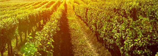 Bando per imprese agricole - Investimenti per la riduzione di gas serra e ammoniaca
